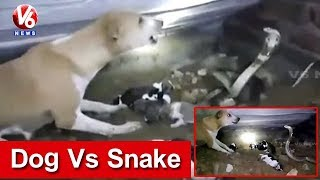 Dog Vs Snake | Dog Fights Cobra To Save Puppies In Odisha