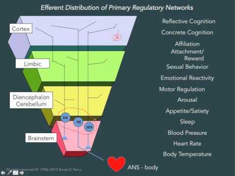 SevenSlideSeries: The Human Brain