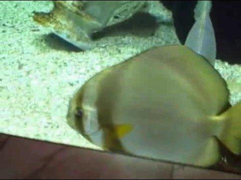 Fish Aquarium at Caesars Palace Casino in Las Vegas Nevada