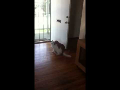 Dog Humps Cat video