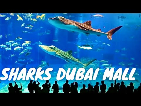 Sharks Dubai Aquarium Underwater Zoo Dubai Mall *HD*