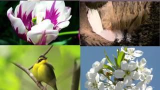 Краски  - весна (песня про весну в РОССИИ)