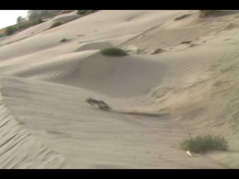 Sandslash Pt 2