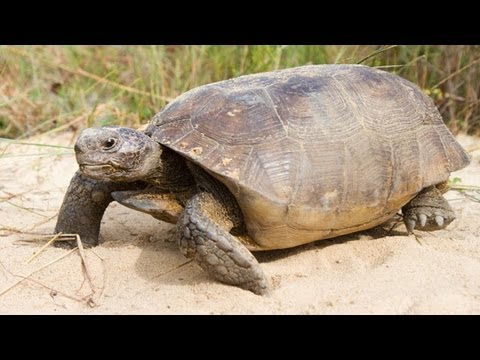 Gopher Tortoises Rescued and Relocated to New Home