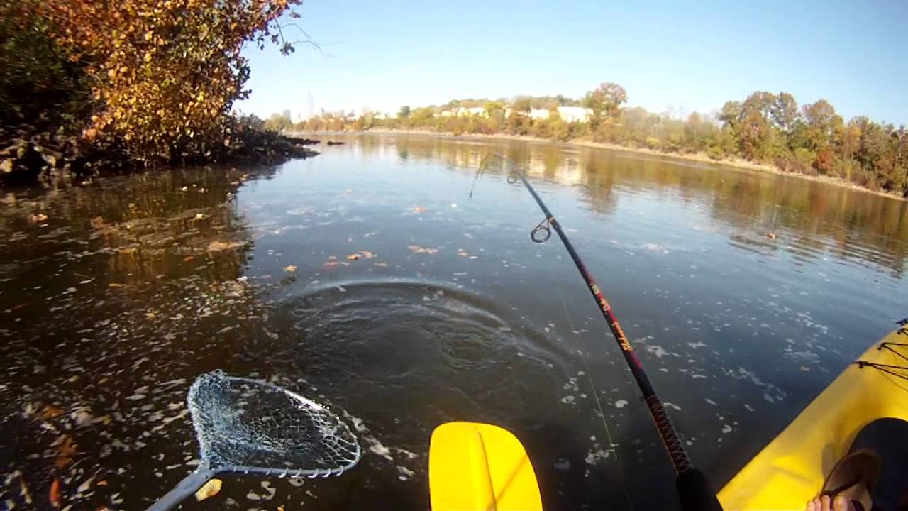 Gopro smallmouth bass kayak fishing from the cumberland for Cumberland river fishing