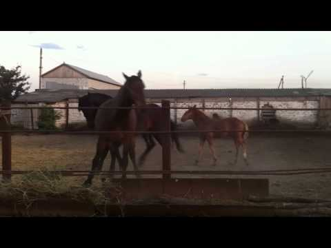 Любовь и лошади