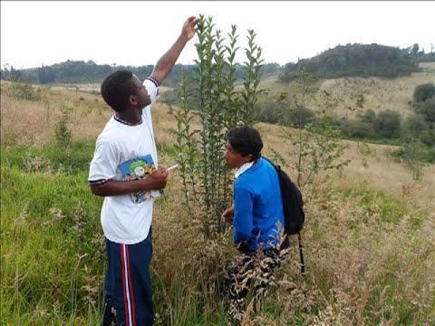 Protección del medio ambiente -- Restauración ecológica
