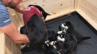 Puppies Reunite with their Mother! (Goes Wrong..)