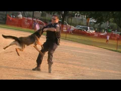Pet Dogs and Police Dog