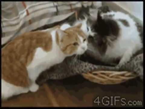 Приколы с кошками и котятами, самые смешные кошки года
