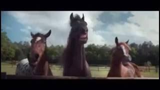 Volkswagen - Horses laugh