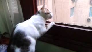 قط بيصوصو مع العصافير - A Cat Singing With Birds