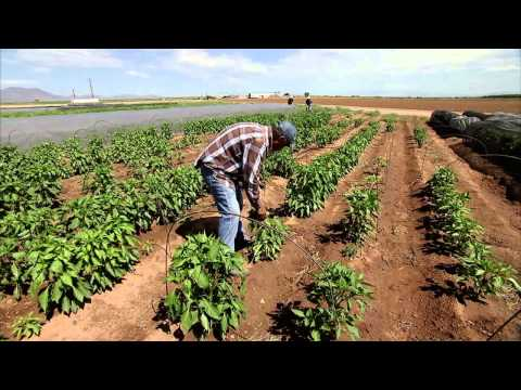 Chile Farming - America's Heartland