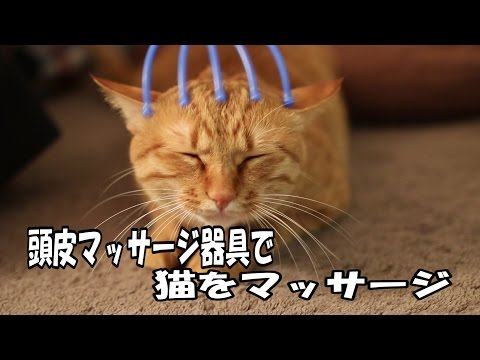 頭皮マッサージ器具で猫をマッサージ  Massage a cat in the scalp massage equipment