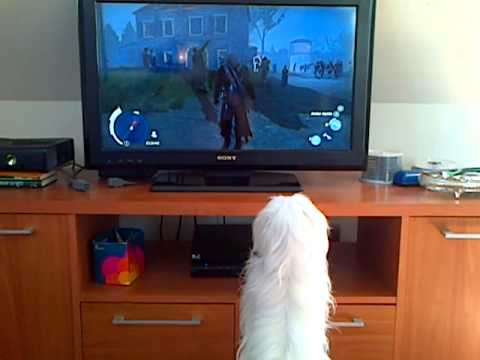 snoopy ladrando al perro de assassin's creed 3 :)