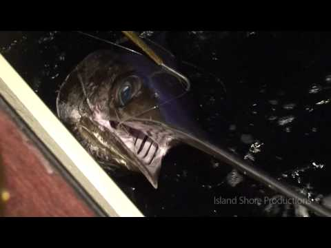 Outer Banks Fishing - Swordfish On The Big Tahuna - Hatteras, NC