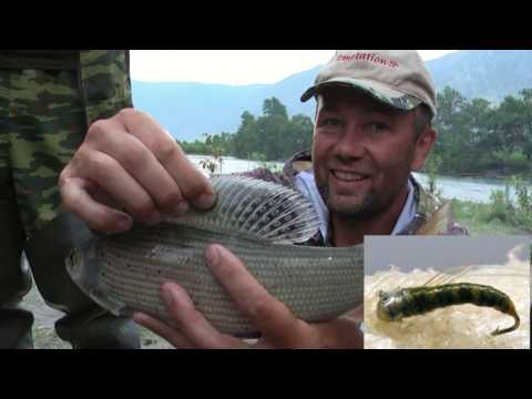 рыбалка на реке чулышмане