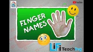 Finger Names: What are Fingers Called? (उँगलियों के नाम शुद्ध हिंदी में)