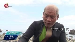 3月潮間帶生物資源豐 東海岸部落忙採集 2017-03-18 Amis TITV 原視族語新聞