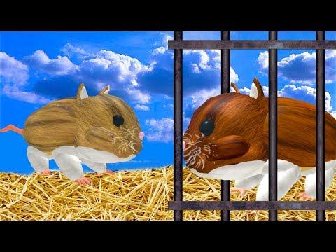 СИМУЛЯТОР квадратной МЫШИ хомячка / симулятор КОТА и других питомцев в ROBLOX от КИДА
