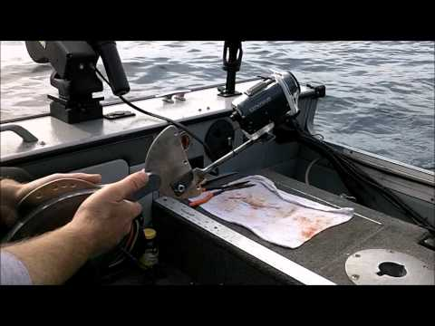 Downrigger Cam - Underwater Footage -  June 17th 2012