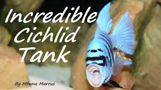 African Cichlid Mbuna Tank 135 Gallon