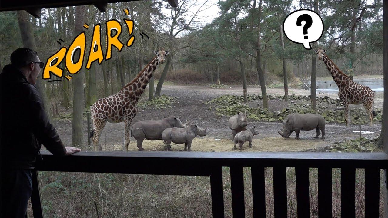 Zoo Animals React To Weird Sounds