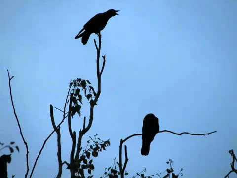 настя полева   на небе вороны
