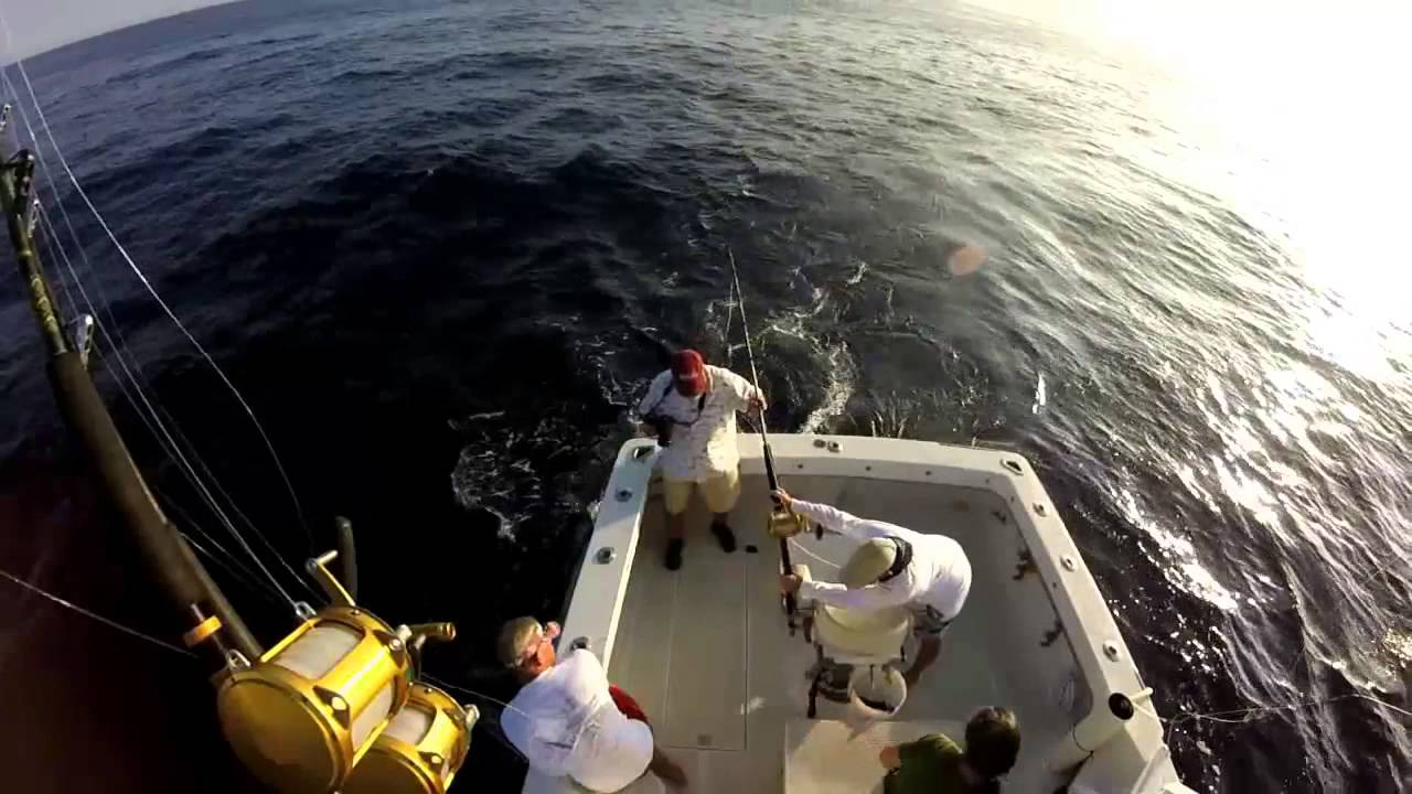 Hula girl sport fishing charters in kona hawaii fishing city for Goose hummock fishing report