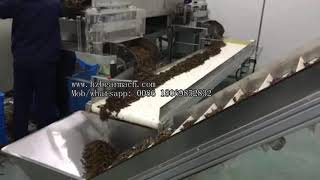 Chinese traditional medicine grass herb production line