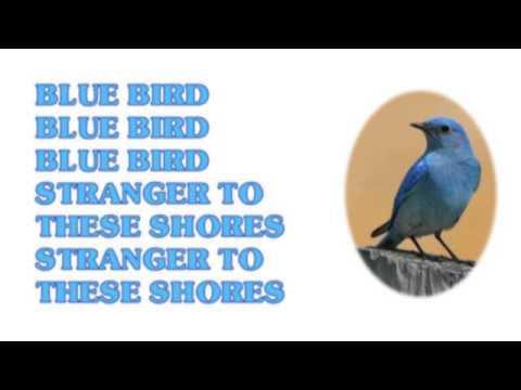 10cc - Bluebird