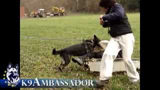 Funny things happen in dog training