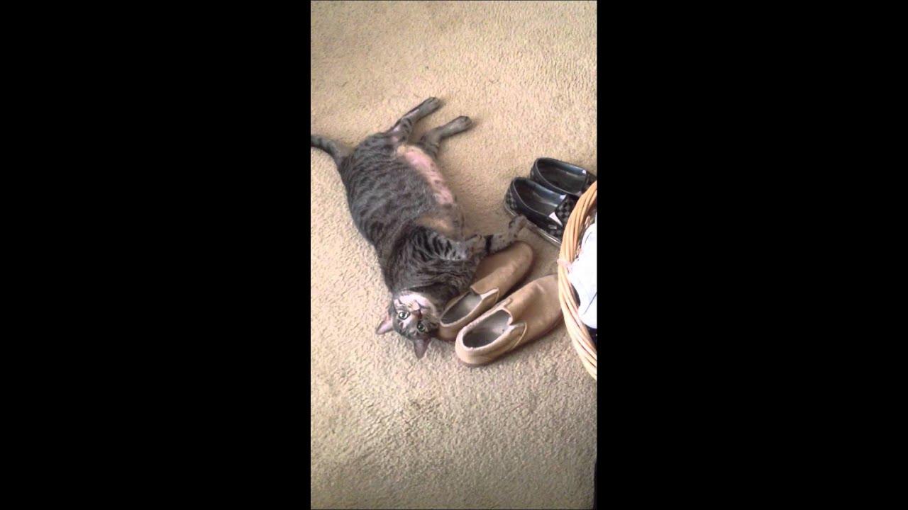 brutal kittens
