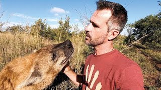 Meet the characters | Bongo, King of the Hyenas | The Lion Whisperer