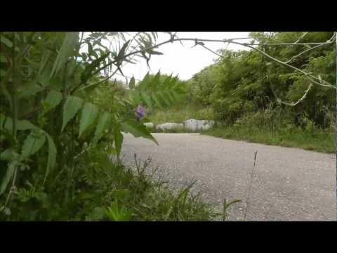 Hairpin Hooligans - A SHort Longboard Film