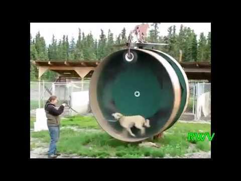 Подборка видеоприколов за февраль 2012