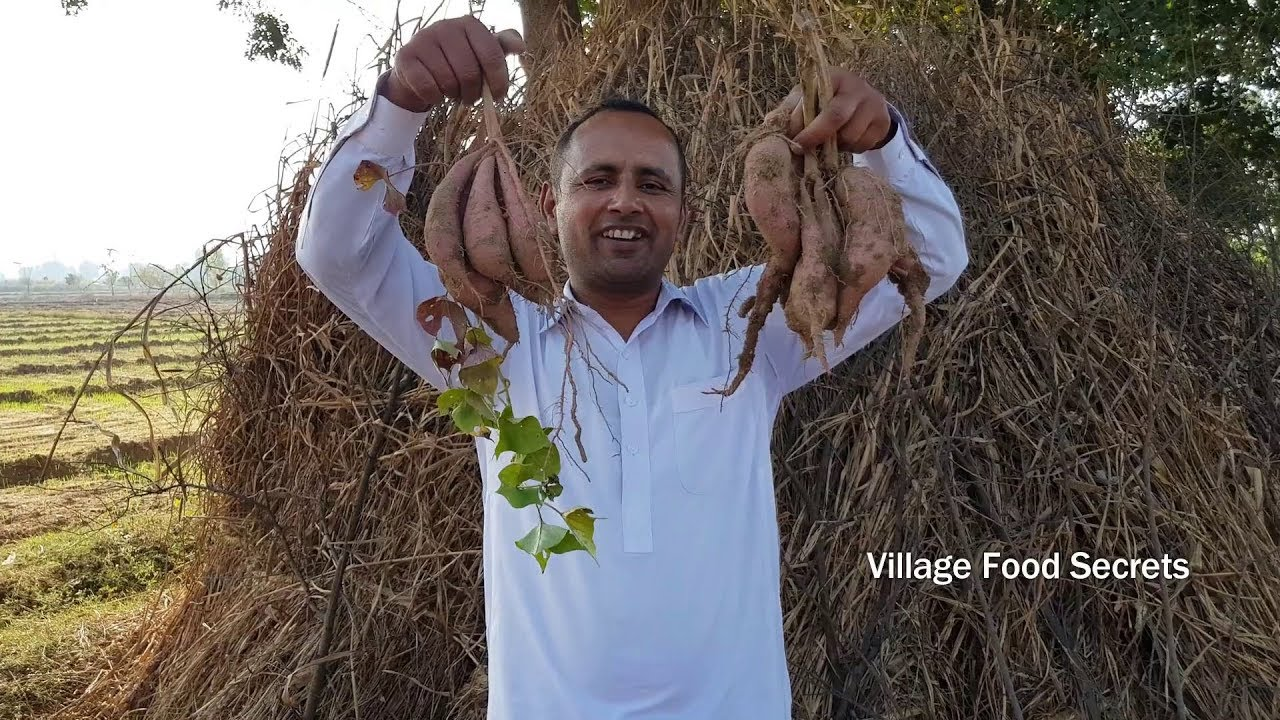 Sweet Potato Recipe | Shakarkandi Recipe | Desi Style | Village Style | Village Food Secrets