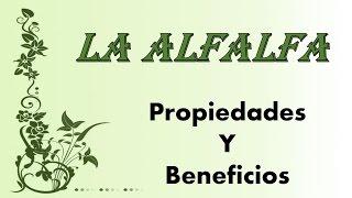 Propiedades y beneficios de la alfalfa para la salud - Plantas medicinales.