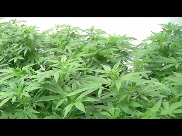 Canada legalizes recreational marijuana, expected to create $4B industry