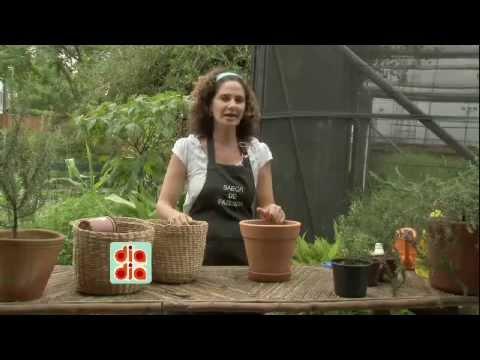 Saiba como cultivar alecrim em casa youtube for Como cultivar peces en casa