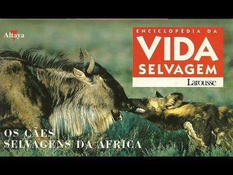Vida Selvagem - Os Cães Selvagens da África - Parte 1 / 5