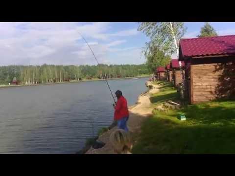 платная рыбалка сазана-карпа