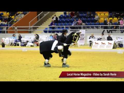 Qld Festival of Dressage - Harold the Horse - Freestyle