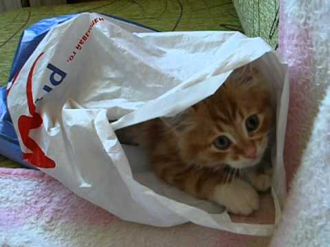 Garfield & The Plastic bag 2
