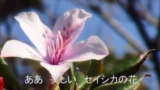 セイシカの花(安里隆)