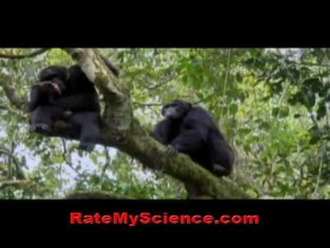 Chimps kill and eat enemy chimps, Rate My Science