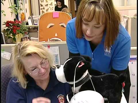 Volunteer at the Fairfax County Animal Shelter