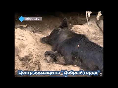 В Улан Удэ под гаражом замуровали облитых бензином бездомных собак