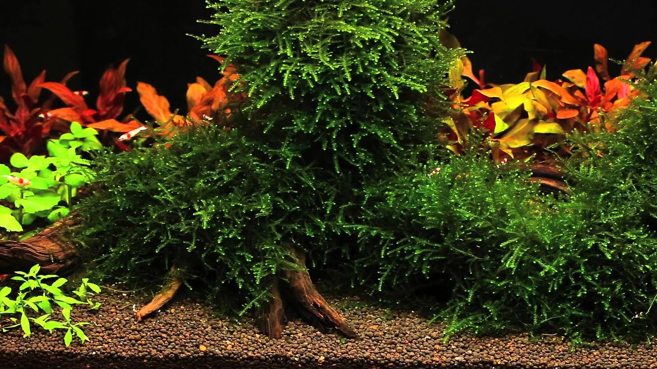 How to Keep Crystal Red Shrimp forecast