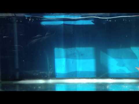 Robot Fish 2 video